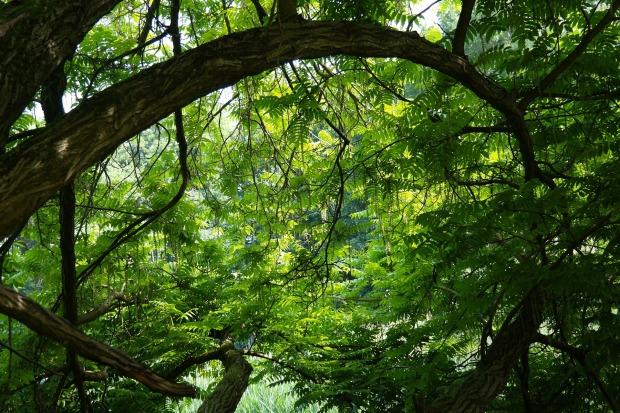 forest scene representing the vorrh
