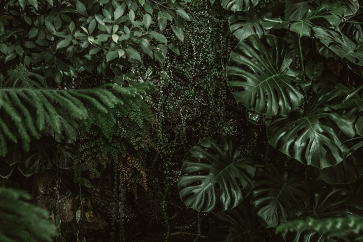 Jungle leaves and vines