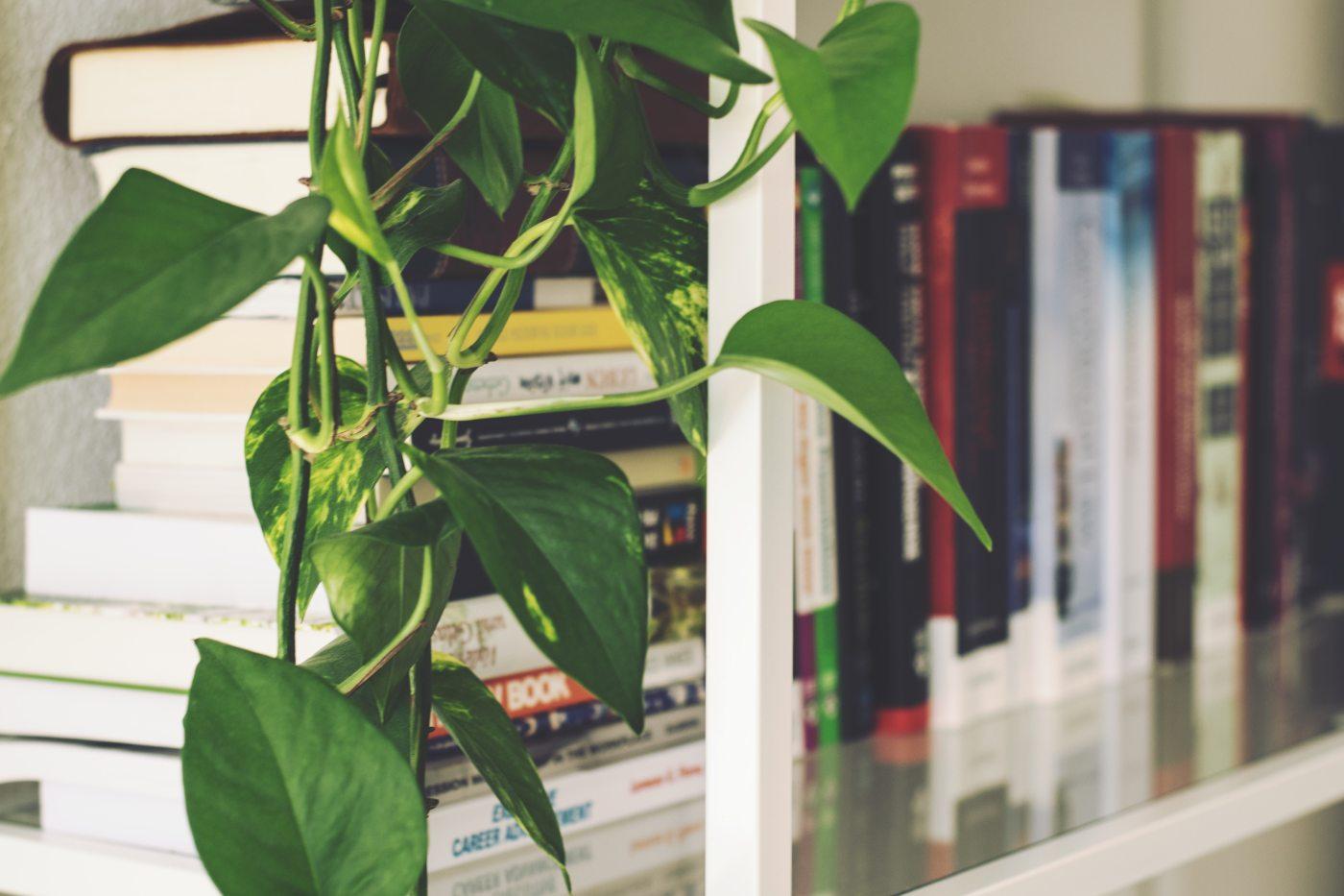 Bookshelf with a plant