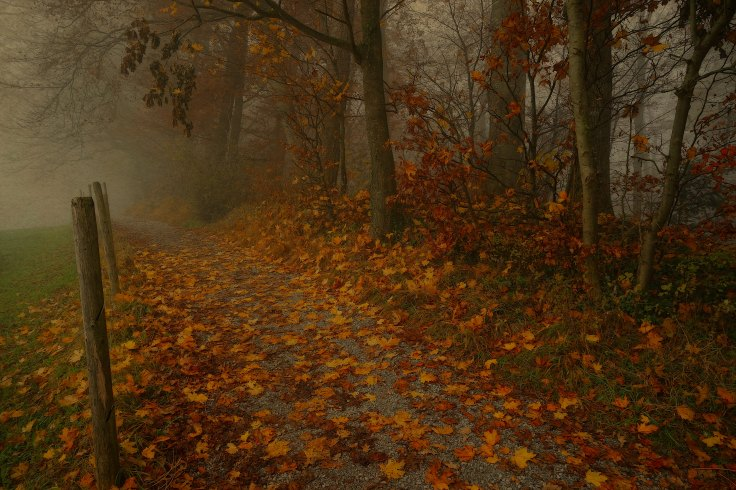 Photo of a wintry path strewn with leaves