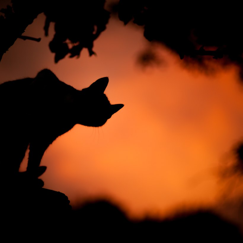 Halloween scene with the silhouette of a cat